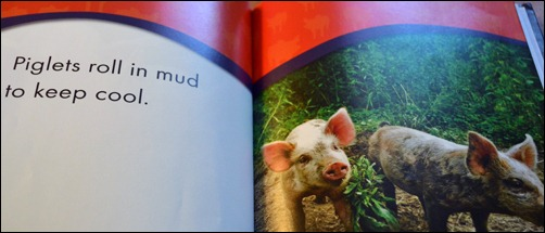Piglets mud