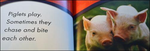 Piglets play