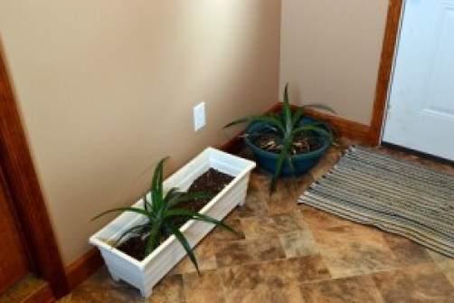 pineapple in the mudroom