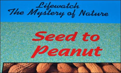 Seed to Peanut