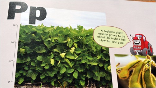 soybeans a to z plants