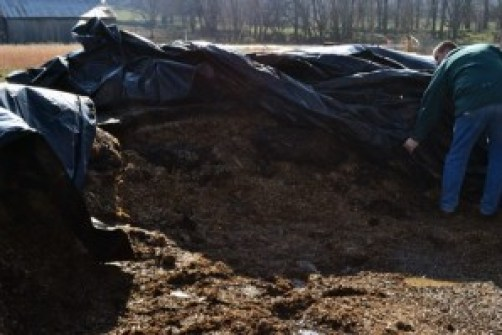 uncovering the silage pile