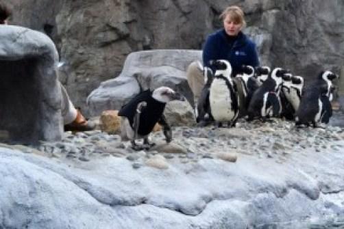 wet suit penguin