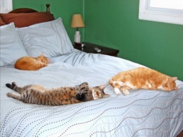Martin napping with his friends