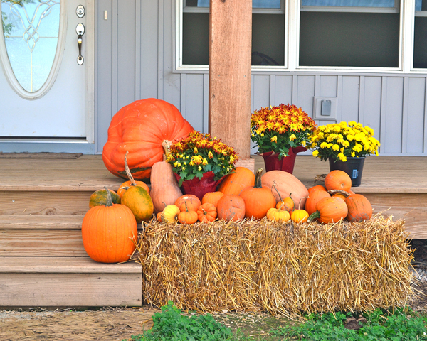 big and small pumpkins for fall decorations