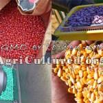 To GMO or to non-GMO?