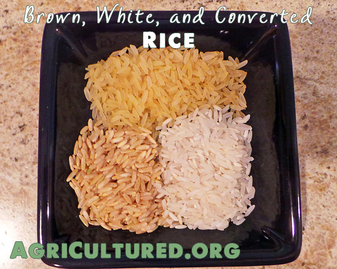 Brown, white, and converted rice