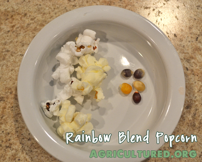 rainbow blend popcorn