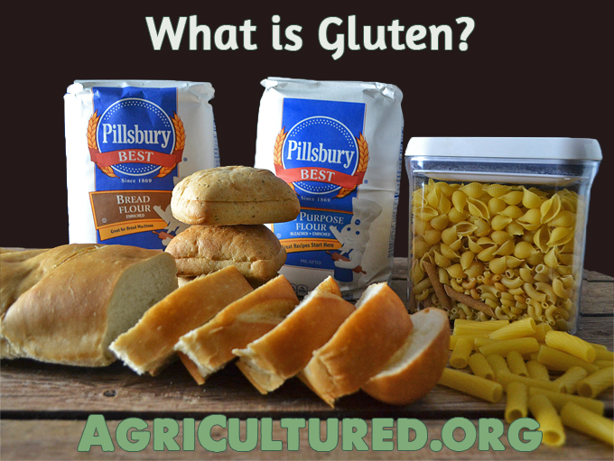 Gluten has a bad reputation. It's just a protein, and it's important for chewy breads, tender pastas, and melt in your mouth pastries! Find out more about gluten and how it works.