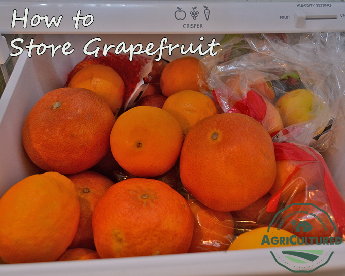 If you plan to keep grapefruit for longer than 5-7 days, store it in the crisper drawer of your refrigerator.