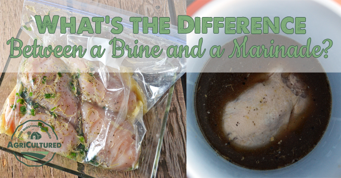 What's the Difference Between a Brine and a Marinade? from My Fearless Kitchen. Brines are a great way to add moisture to meats and marinades are a great way to add flavor. Find out even more about the difference between a brine and a marinade, and when to use each one.