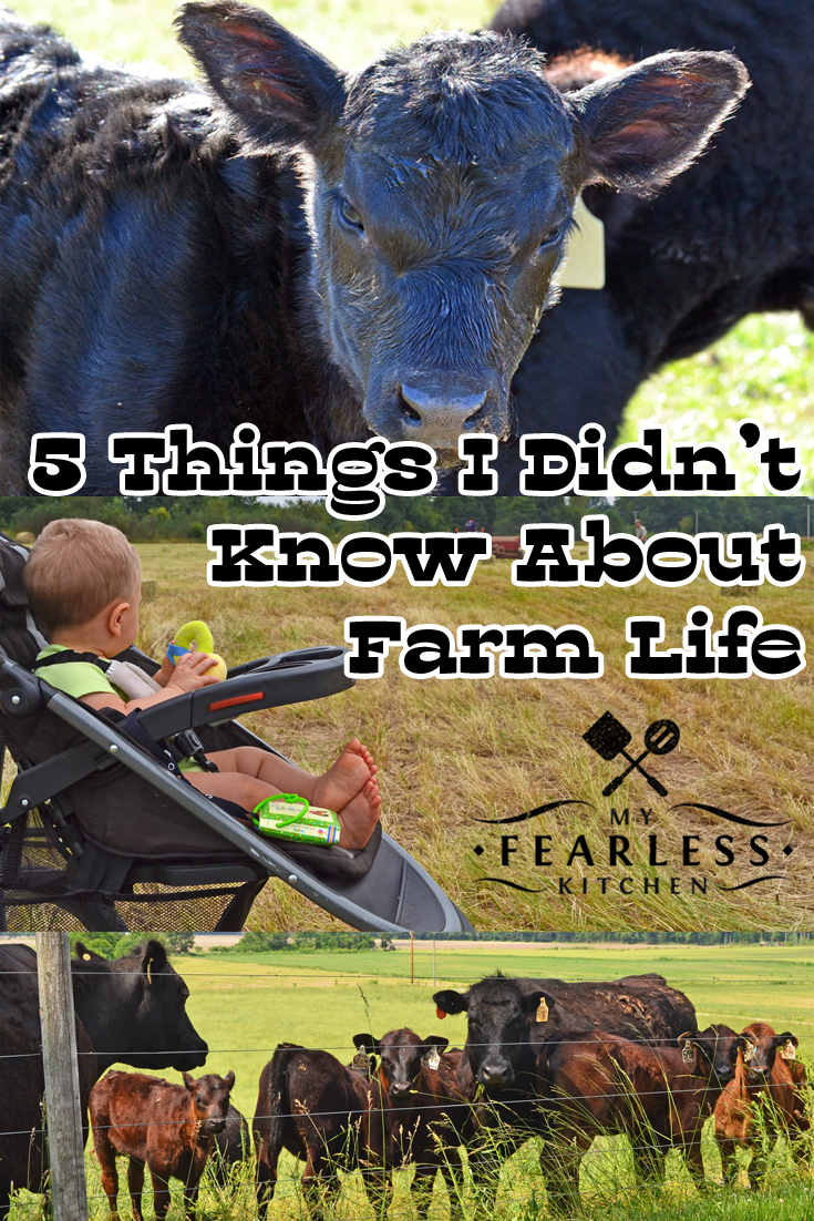 5 Things I Didn't Know About Farm Life from My Fearless Kitchen. Do you ever wonder what it would be like to live on a farm? Farm life is a lot of hard work, and it takes help from each family member. I love my farm family, and wouldn't change anything.