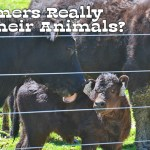 Do Farmers Really Love Their Animals?