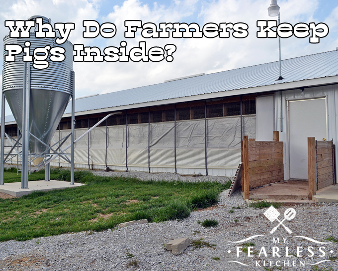 Why Do Farmers Keep Pigs Inside? from My Fearless Kitchen. Most pigs are kept in barns. If it's too hot or too cold they can quickly get stressed and sick. See how farmers keep their pigs comfortable and healthy.
