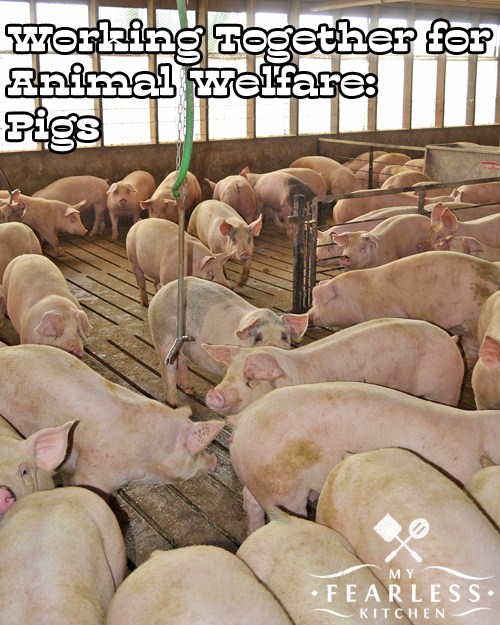 Farmers & Veterinarians: Working Together For Animal Welfare from My Fearless Kitchen. Everyone who takes care of animals is concerned about their welfare. Farmers work closely with veterinarians to ensure the best animal welfare possible.