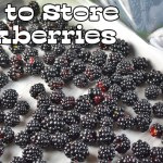 How to Store Blackberries