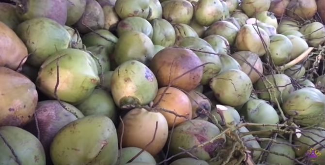 Best ways to take dry coconut benefits-Coconut-Image-1