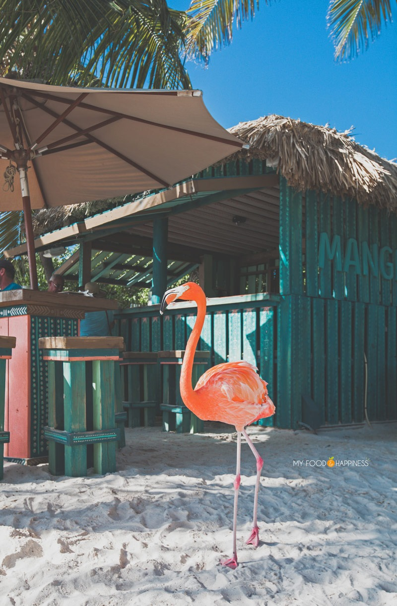 5 Reasons To Visit Flamingo Beach In Aruba Besides The