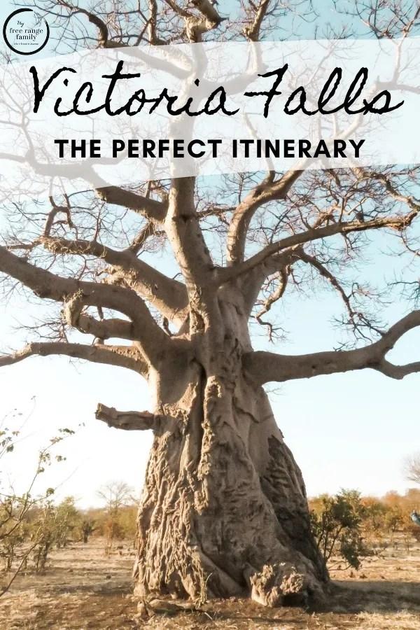 Baobab tree, Zambezi National Park