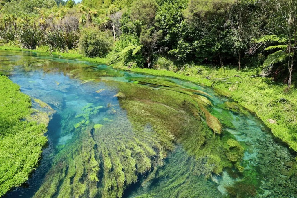 Best places to visit in the North Island, New Zealand - Putaruru Blue Springs