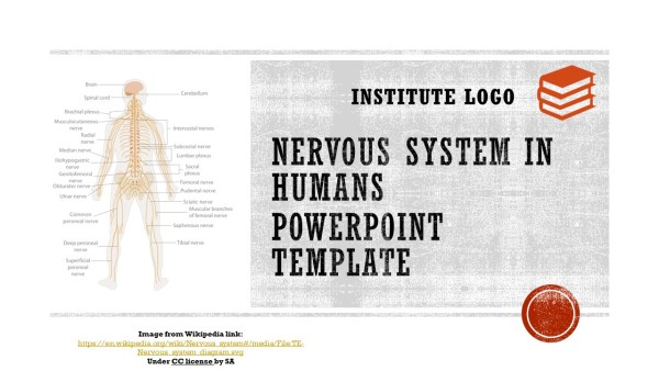 Free Nervous System Powerpoint Template Myfreeslides