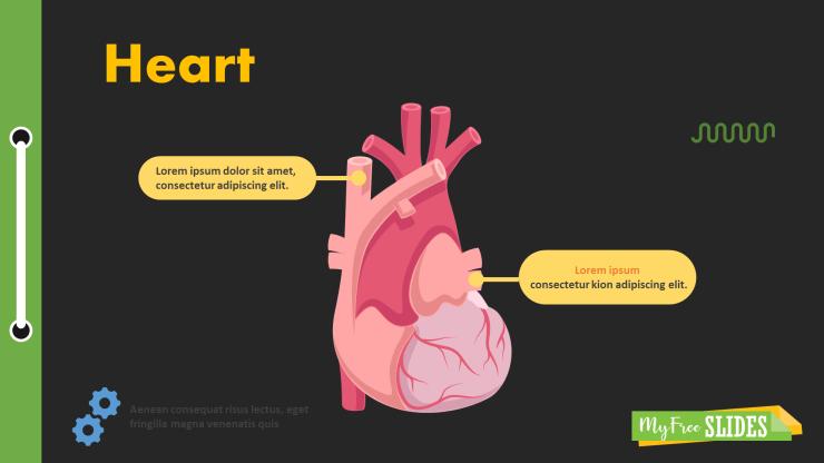 Heart Presentation Slide