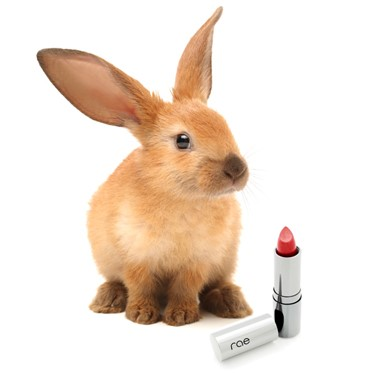 animal testing standards - myfrenchtwist.com