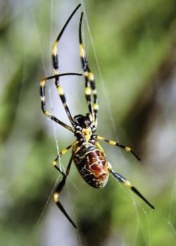 spider lesson plans