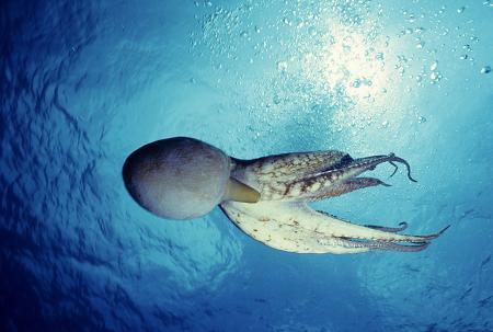 octopus classroom ideas
