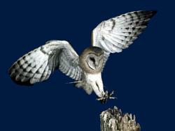 owl classroom ideas