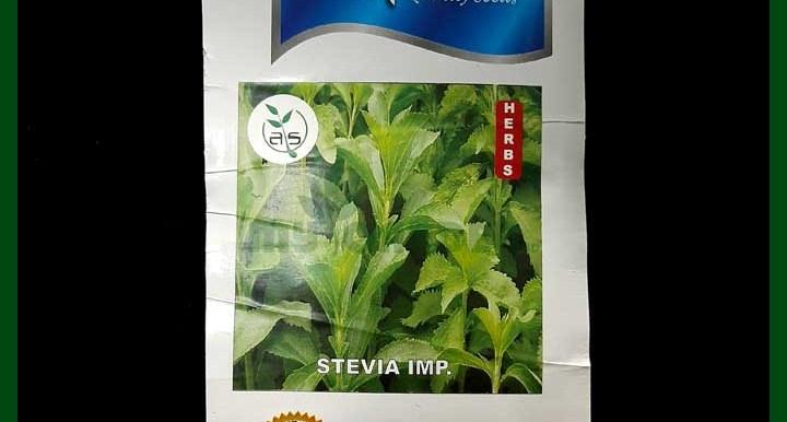 Stevia - Seeds - Indian - Alpine