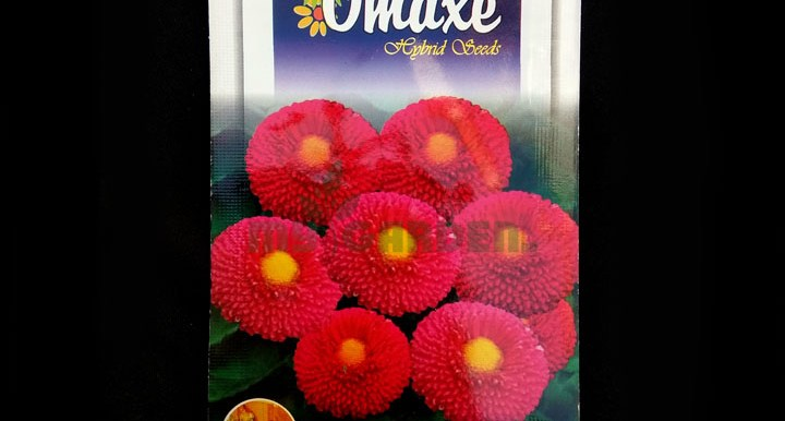 Daisy Red Bellis Perensis – (80 seeds) – Omaxe - Indian