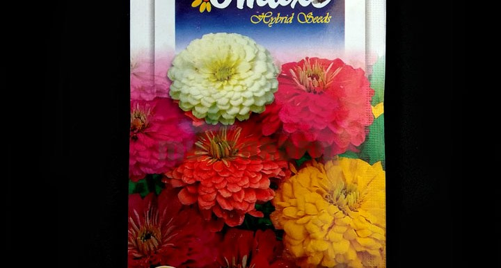 F1 Giant Mixed Zinnia Elegans – (50 seeds) – Omaxe - Indian