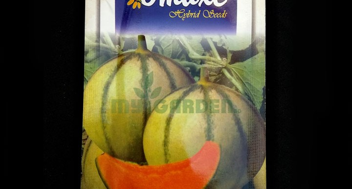Muskmelon Mithas F1 Hybrid – (10 seeds) – Omaxe - Indian