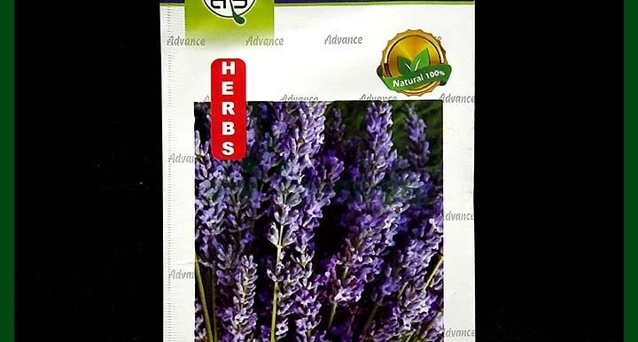 Lavender IMP. – Seeds - Indian - Advance Seed