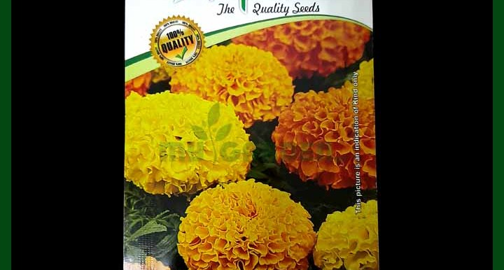 Marigold Mix - Alpine - Flower Seeds