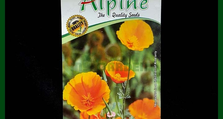 Poppy California - 40 Seeds - Alpine - Indian