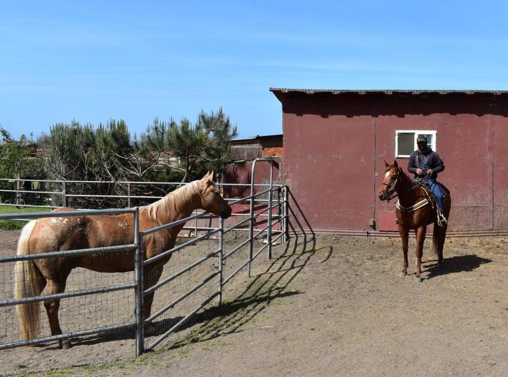 Sea Horse Ranch in Half Moon Bay offering horseback riding along the beach