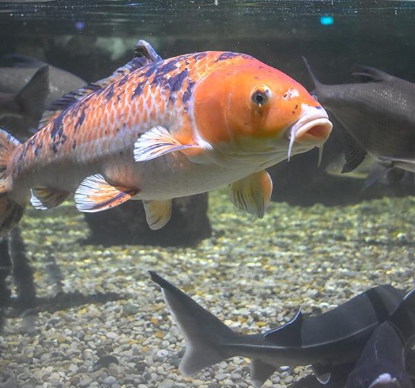 Sea Life Center, Brighton Aquarium.