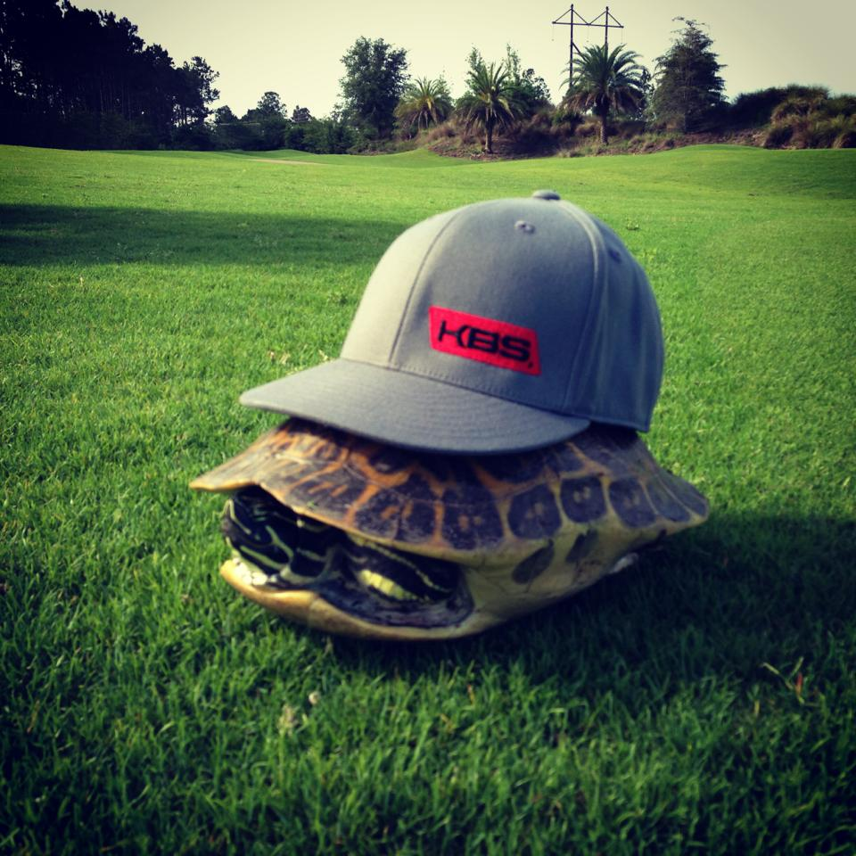 Image result for golf turtle