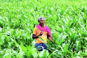 farmers-can-purchse-seeds-by-old-currency