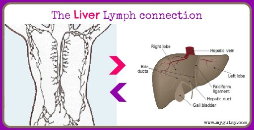 liver lymph