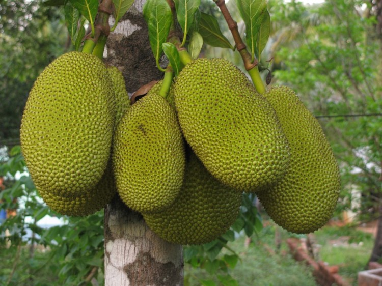 foodtrends 2019 - jackfruit