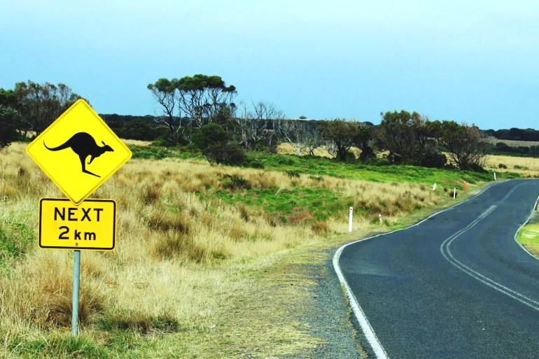 Wo Warnschilder stehen, hüpfen abends tatsächlich Kängurus über die Straße