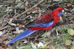 Bunte Papageien gibt es viele