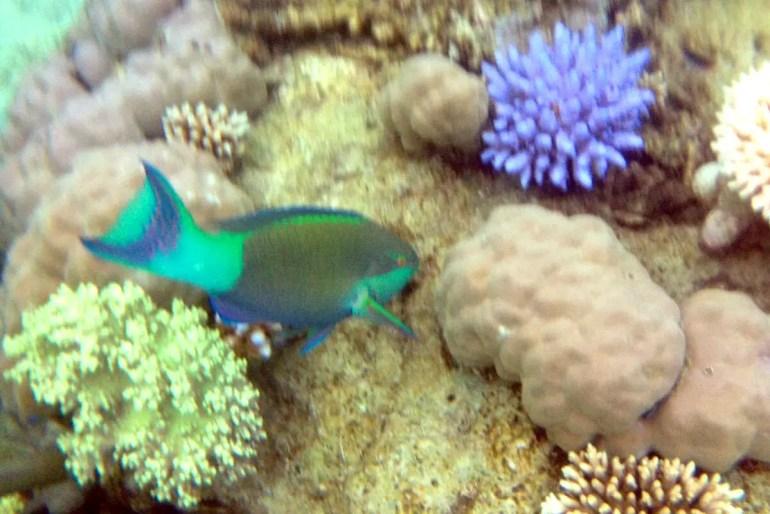 Atemberaubend schön und kaum mit der Kamera festzuhalten: die Unterwasserwelt am Great Barrier Reef