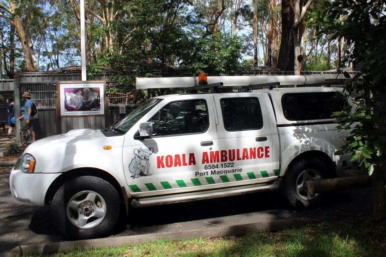 Ein Koala-Krankenwagen holt die verletzten Tiere ab