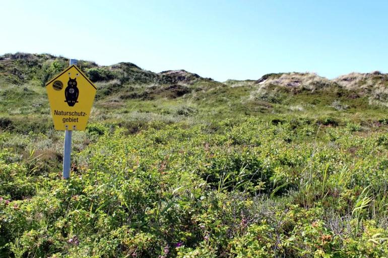 Die Dünen auf Sylt stehen fast komplett unter Naturschutz