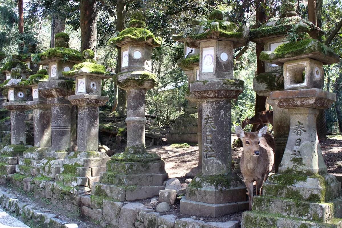Die Steinlaternen führen hinauf zum Kasuga-Taisha - und dazwischen versteckt sich immer wieder ein Hirsch