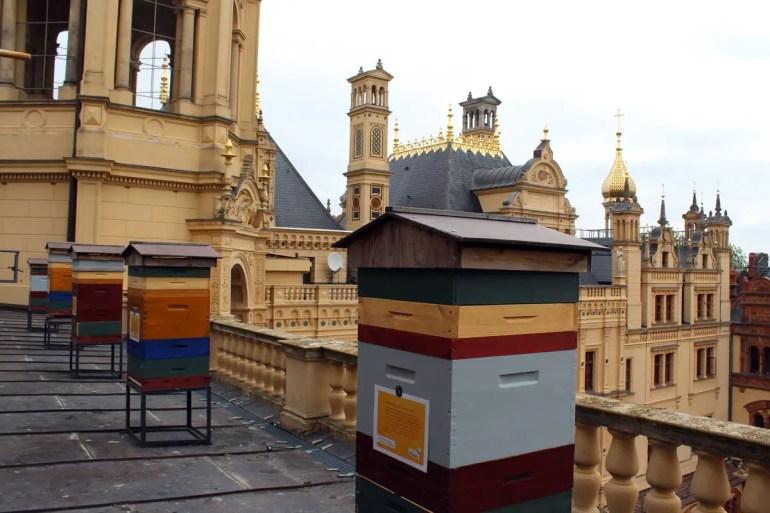 Auf dem Dach des Schweriner Landtags fühlen sich die Schlossbienen pudelwohl